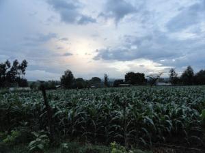 Kenyan landscape picture