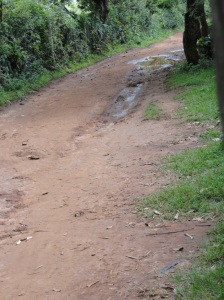Typical Village Road